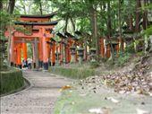 Fushimi-Inari Taisha, Kyoto: by carla_and_dean, Views[124]