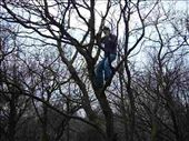Robbo up a tree: by carm, Views[237]