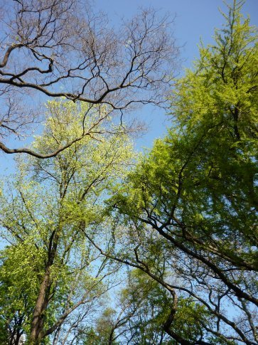 Green trees on blue blue, my fave