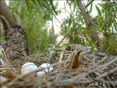 The Nest: by carolineguzman, Views[118]