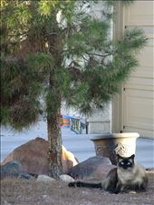 the cat composition: by carolineguzman, Views[65]