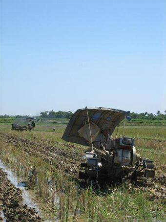 The modern day water buffalo hard at work in the rice paddies.