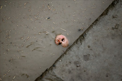 A doll lies abandoned in a gutter after heavy rain in Kabul.   The drains running alongside either side of the roads in Kabul are usually uncovered and are often used to dispose of rubbish and sewerage.