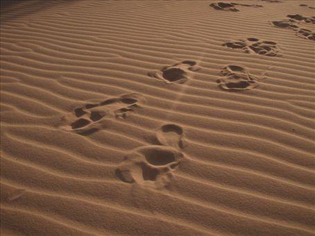 Colline de sables. Le vent pousse le sable vers la foret et la detruit. Il detruit la foret de 5 km a tous les ans.