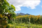 Paarl: by cayly, Views[52]