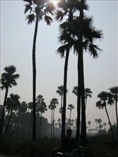 Palm Trees, Khambatt: by cb, Views[1221]