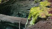 Moss growing in clear water: by cfitchey, Views[127]