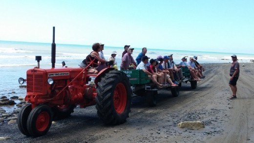 We rode with this type of tractor trailer down the beach to Cape Kidnappers