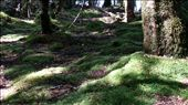 Moss on the ground in the forest outside the glow worm caves: by cfitchey, Views[149]