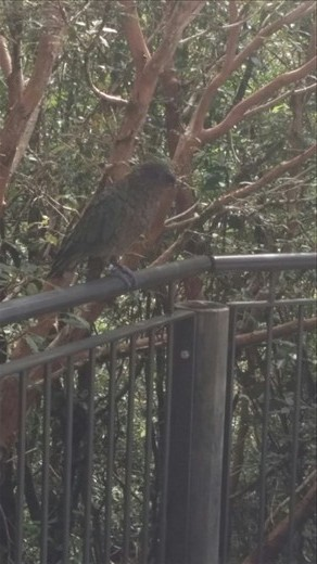 Bird we saw in the parking lot