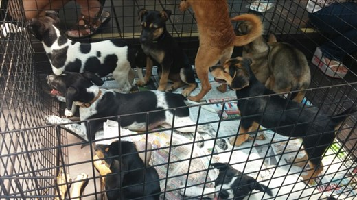 Puppies for adoption at the park