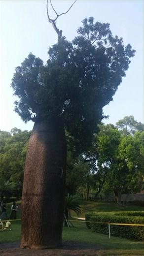 A bottle tree