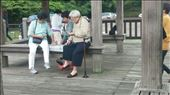 Old ladies playing cards at the park. Kind of a strange place to do this.: by cfitchey, Views[65]
