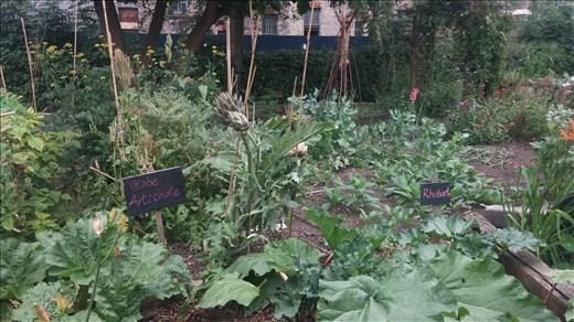 City Farm Garden