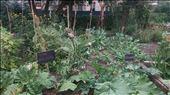 City Farm Garden: by cfitchey, Views[108]