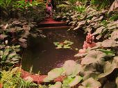 Little fish pond with heaps of fish like LONGY grandad.: by chanelle_ross, Views[199]