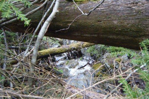 Green Lake Loop Hike 25th May