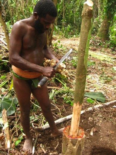 Making Kava