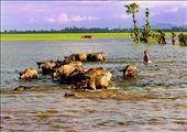 Go home in floodplain: by chaudoc, Views[203]