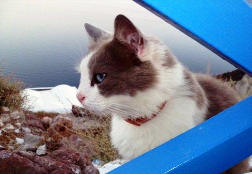 well fed Santorini cate