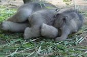 How can you not love baby elephants?: by chicagoguy, Views[368]