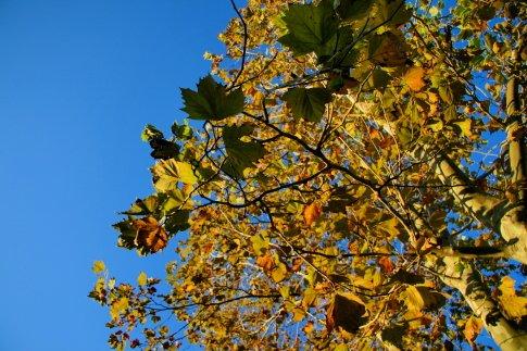 Kanske lite mer brunt - men det blir faktiskt höst på träden här också!