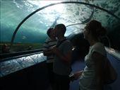 Sydney Aquarium: by chiclet, Views[108]