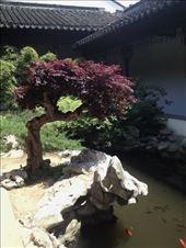 Garden Museum inner garden courtyard: by chinaho, Views[47]