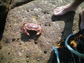 one of the crabs: by chloe, Views[275]