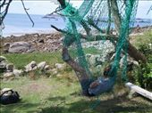 Hammock with a view on Bryher: by chloe, Views[199]