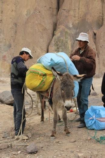 Loading up the donkeys