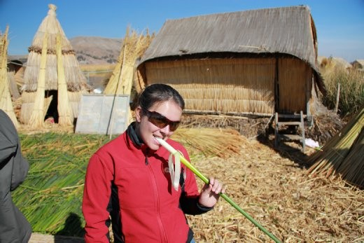 The reed that the floating islands are made up of, you can eat it too