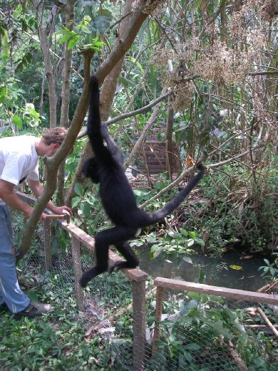 Spider monkey.....the one that doesn't like me anymore