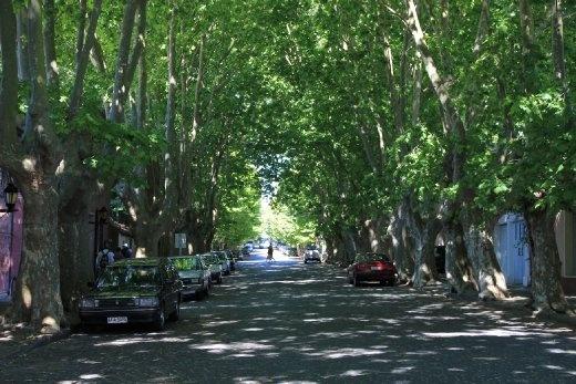 Avenue in Colonia