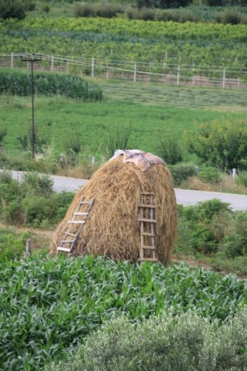 Typical hay stack