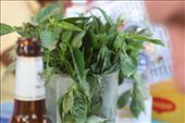Basil garnish: by christa_spencer, Views[215]