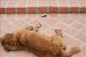 Dog with pig foot... we found this scene at the bottom of the mountain temple.: by christa_spencer, Views[122]