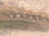 Fledermaeuse - Bats (Canon Negro): by christinasandra, Views[246]