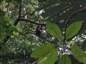 Regenwald beim Vulkan Arenal - Rain forest near the Volcano Arenal: by christinasandra, Views[316]