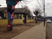 Noticed these yarn-bombed trees outside an elementary school leaving Chanco!: by christinebaker, Views[178]