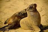 Sea Lion: by christinetravels, Views[173]