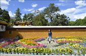 This was taken at the Norbulingka compound in Lhasa. If you want to see a drastic difference, check out my photo submissions for the 2011 photography competition! : by cici, Views[318]