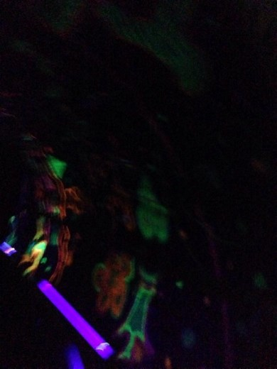 Glow in the dark spinning room. That was super dizzy but a super awesome experience!