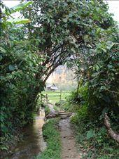 Jungle Trekkin': by cl_mcdaniel, Views[116]