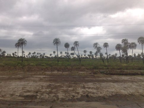 Entrance to a national park that was set up to ensure that these palms survived...used to cover lots of Brazil, Argentina and Uruguay. Just passed it on bus