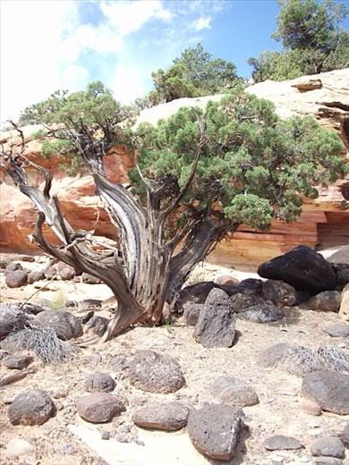 Desert landscape, Utah