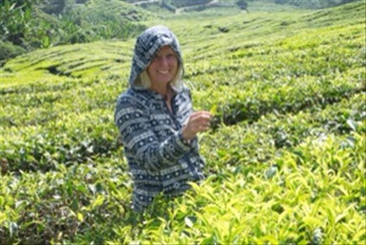 Tea picking in the Cameron Highlands