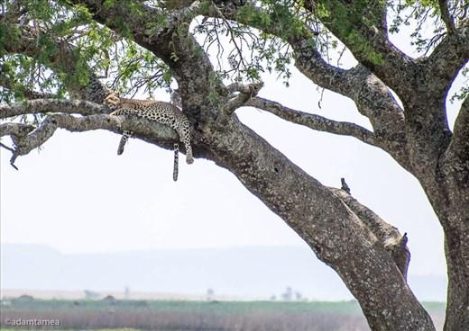 Spot the leopard - my favourite