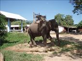 Elephant at Karen tribe village, near Chiang Rai : by clare-tamea, Views[127]