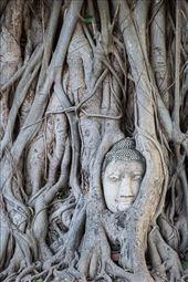 Buddha head in living tree: by clare-tamea, Views[127]